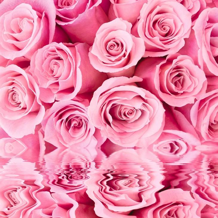 Фотообои «Розовые розы»