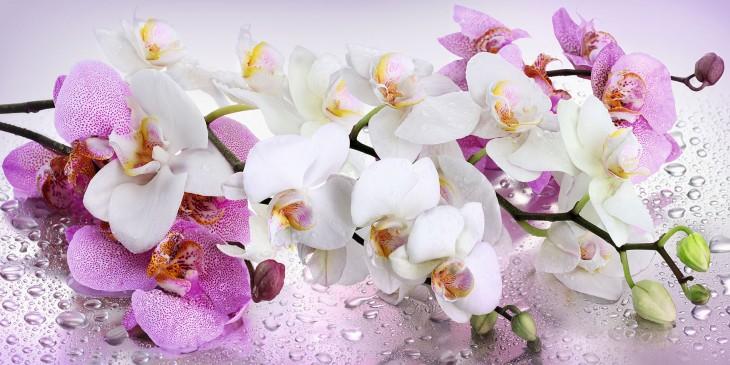 Фотообои «Орхидея»