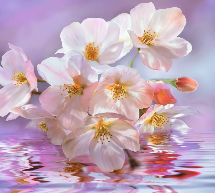 Фотообои «Цветение»