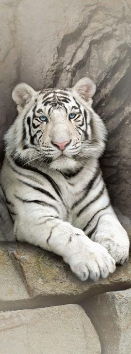 Фотообои «Белый тигр»