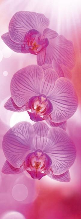 Фотообои «Розовое танго»
